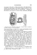 Página 195