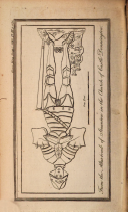 Página 1155